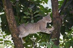 Gatto sull'albero Fotografie Stock Libere da Diritti