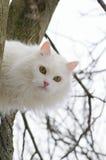 Gatto sull'albero Fotografia Stock