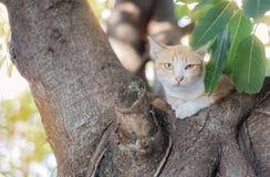 Gatto sull'albero Immagini Stock Libere da Diritti