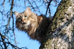 Gatto sull'albero Immagini Stock