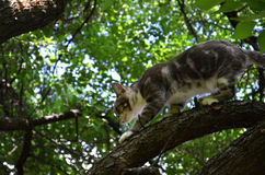 Gatto sull'albero Fotografie Stock