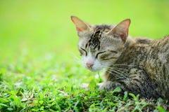 Gatto sull'erba Immagine Stock