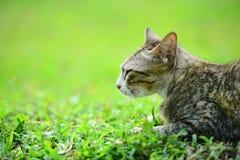 Gatto sull'erba Fotografie Stock