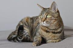 Gatto sulla base Immagine Stock