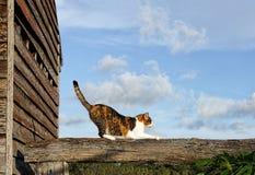 Gatto sulla ferrovia di recinto di legno Fotografia Stock