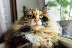 Gatto sulla finestra Fotografia Stock