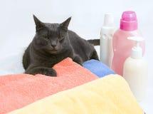 Gatto sulla lavanderia variopinta da lavare Fotografie Stock