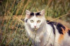 Gatto sulla natura Fotografia Stock Libera da Diritti