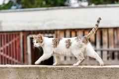 Gatto sulla parete Immagine Stock