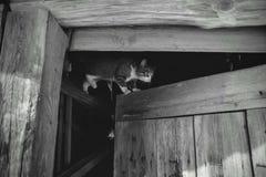 Gatto sulla porta fotografie stock libere da diritti