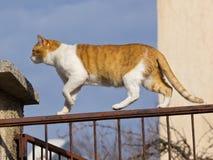 Gatto sulla rete fissa Fotografie Stock