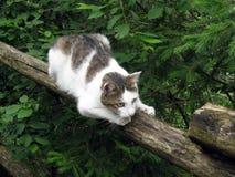 Gatto sulla rete fissa Fotografie Stock Libere da Diritti
