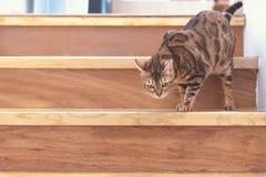 gatto sulla scala immagini stock