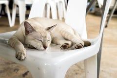 Gatto sulla sedia Immagini Stock