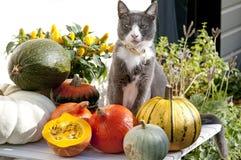 Gatto sulla tavola del giardino con la zucca Immagine Stock Libera da Diritti