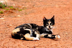 Gatto sulla terra Fotografia Stock Libera da Diritti
