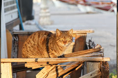 Gatto sulla via Immagine Stock Libera da Diritti