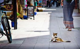 Gatto sulla via di Essauira Immagini Stock Libere da Diritti