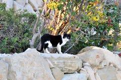 gatto sulle rocce Fotografia Stock Libera da Diritti