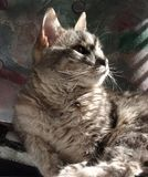 Gatto in Sun Fotografie Stock