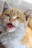 Gatto sveglio Immagine Stock Libera da Diritti