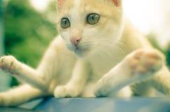 Gatto sveglio Fotografie Stock