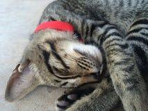 Gatto sveglio Immagine Stock
