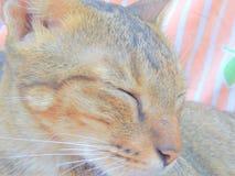 Gatto sveglio Fotografie Stock Libere da Diritti
