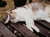 Gatto sveglio che dorme nel parco Immagine Stock