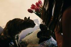 Gatto sveglio che gioca con i tulipani nella mattina nella sala momenti divertenti w Fotografie Stock