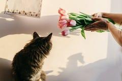 Gatto sveglio che gioca con i tulipani nella mattina nella sala momenti divertenti w Fotografia Stock