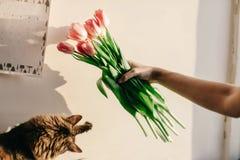 Gatto sveglio che gioca con i tulipani nella mattina nella sala momenti divertenti w Fotografia Stock Libera da Diritti