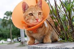 Gatto sveglio che indossa il collare di plastica arancio del cono Fotografie Stock Libere da Diritti