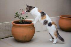 Gatto sveglio che odora un fiore Fotografie Stock Libere da Diritti