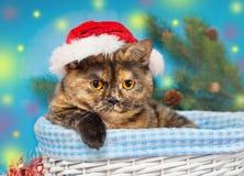 Gatto sveglio che porta il cappello di Santa Fotografia Stock