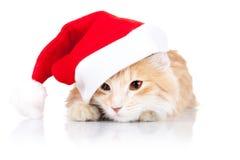 Gatto sveglio che porta un cappello della Santa Immagini Stock
