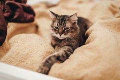 Gatto sveglio che riposa sul letto giallo nella stanza alla moda, spazio per testo Immagine Stock
