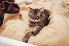 Gatto sveglio che riposa sul letto giallo nella stanza alla moda, spazio per testo Fotografia Stock Libera da Diritti