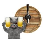 Gatto sveglio con un vetro di birra e del barilotto Isolato su bianco fotografia stock libera da diritti