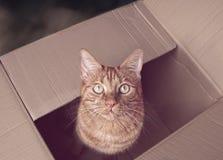 Gatto sveglio dello zenzero che si siede in una scatola di cartone e che rispetta la macchina fotografica Immagini Stock