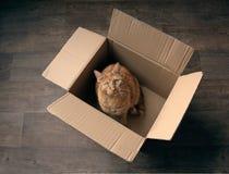 Gatto sveglio dello zenzero che si siede in una scatola di cartone su un pavimento di legno e che sembra curioso alla macchina fo Fotografie Stock Libere da Diritti