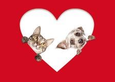 Gatto sveglio e cane che danno una occhiata dal cuore del ritaglio fotografia stock libera da diritti