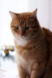 Gatto sveglio e simile a pelliccia Fotografia Stock