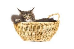 Gatto sveglio isolato sopra fondo bianco Immagini Stock Libere da Diritti