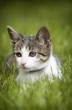 Gatto sveglio nell'erba Fotografia Stock Libera da Diritti
