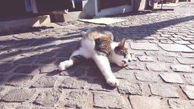 Gatto sveglio pigro Fotografia Stock Libera da Diritti
