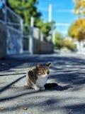 Gatto sveglio senza tetto che si siede sulla via con fondo vago fotografia stock