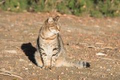 Gatto sveglio solo che si siede e che gode della luce del sole Immagine Stock Libera da Diritti