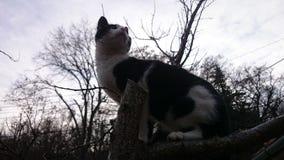Gatto sveglio su nell'albero fotografie stock
