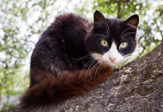 Gatto sveglio su un albero Fotografia Stock Libera da Diritti